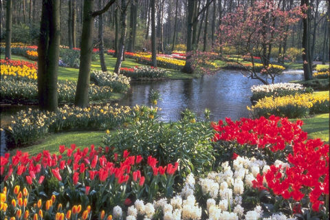image of waterway bordered by flowers and trees